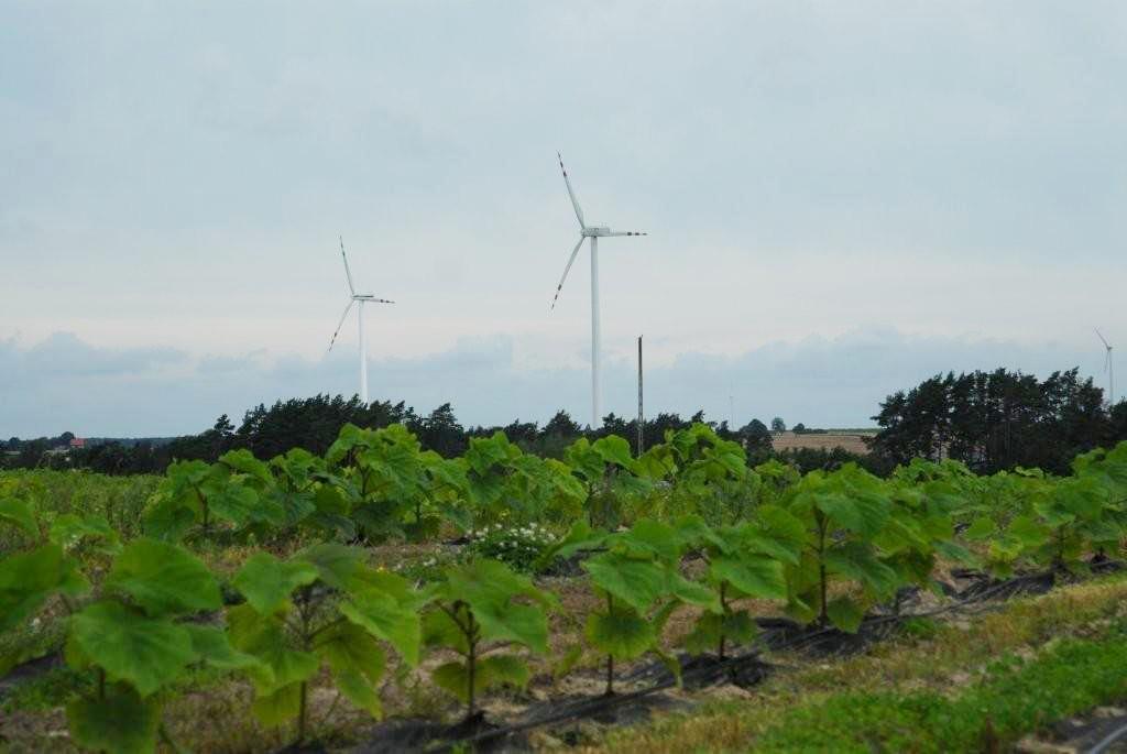 Nasza plantacja drzew tlenowych